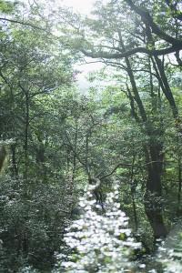 屋久島_029